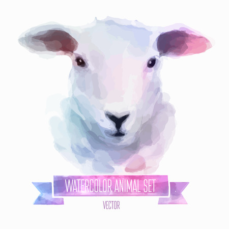 young animal: Vector set of watercolor illustrations. Cute sheep