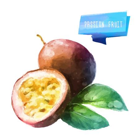 owoców: Passion fruit ręcznie rysowane akwarela, na białym tle.