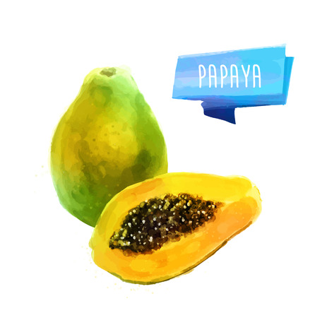 Papaya hand drawn watercolor, on a white background. Ilustração