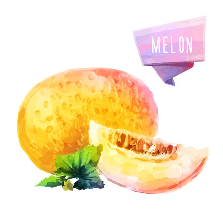 Melon hand drawn watercolor, on a white background.  イラスト・ベクター素材