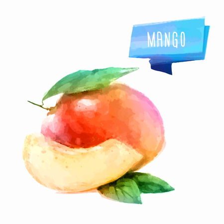 Mango hand drawn watercolor, on a white background. Illustration