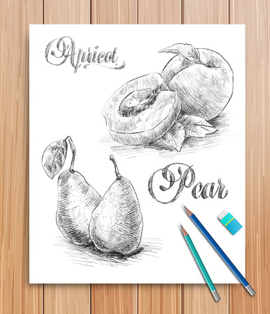 apricot: Vector realistic sketch of fruits apricot and pear