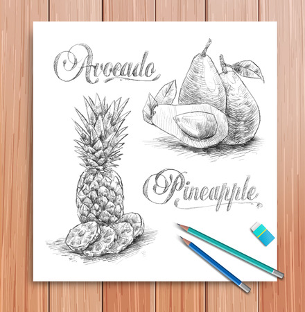 Vector realistic sketch of fruits avocado and pineapple Vector