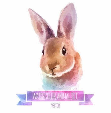동물: 수채화 그림의 집합입니다. 귀여운 토끼