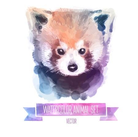 oso panda: conjunto de ilustraciones de acuarela. Panda rojo lindo