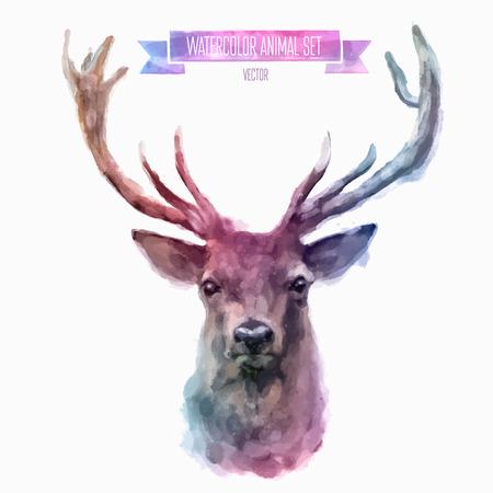 animal: 向量組的水彩插圖。可愛的小鹿