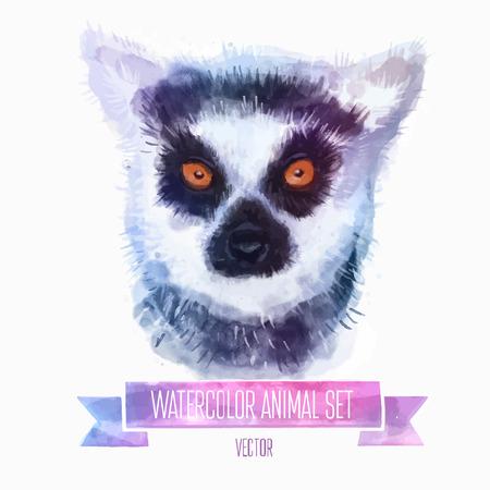 tailed: Vector set of watercolor illustrations. Cute lemur