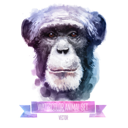 Vector set of watercolor illustrations. Cute monkey Illusztráció