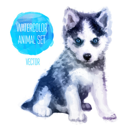 Vector set of animals. Huskies hand painted watercolor illustration isolated on white background