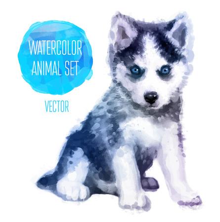 Vector conjunto de animales. Huskies ilustración mano acuarela pintada aislada en el fondo blanco Foto de archivo - 42771400