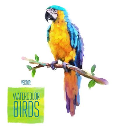 loros verdes: Acuarela aves ex�ticas aislado en fondo blanco. Ilustraci�n vectorial