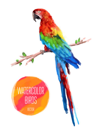 papagayo: Acuarela aves exóticas aislado en fondo blanco. Ilustración vectorial
