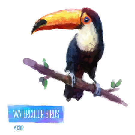Watercolor exotic bird toucan solated on white background. Vector illustration