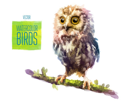 Owl watercolor bird isolated on white background. Vector illustration