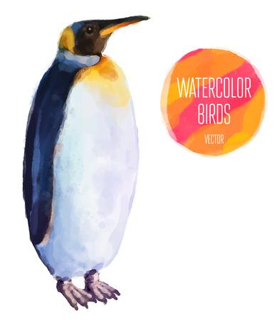 pinguino caricatura: Ping�ino de la acuarela de aves aisladas sobre fondo blanco. Ilustraci�n vectorial Vectores
