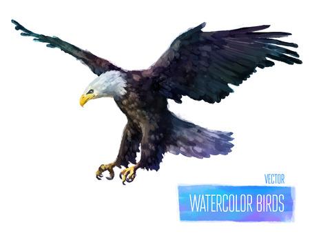 Eagle waterverf vogel op een witte achtergrond. Vector illustratie