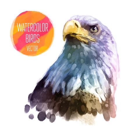halcones: Águila acuarela aves aisladas sobre fondo blanco. Ilustración vectorial
