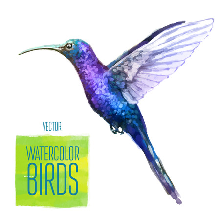 Colibri watercolor  bird isolated on white background. Vector illustration Vettoriali
