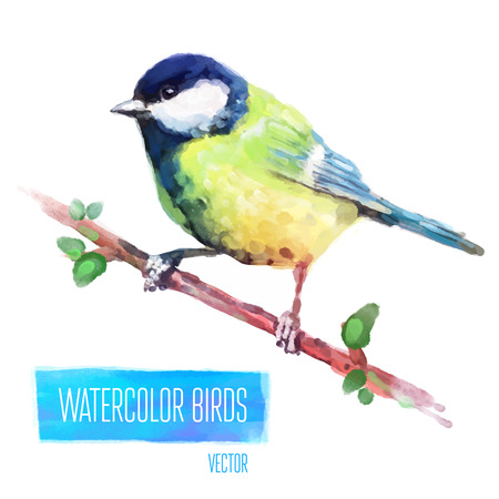 arbol p�jaros: Tit acuarela aves aisladas sobre fondo blanco. Ilustraci�n vectorial