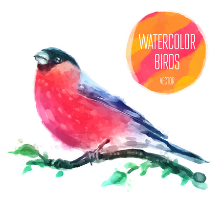 water bird: Watercolor Bird Red-capped Robin On Branch Hand Painted Illustration on white background