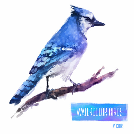 birds: Watercolor exotic bird isolated on white background. Vector illustration