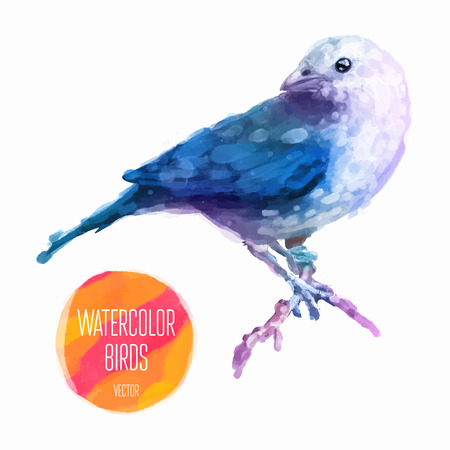 finch: Watercolor exotic bird isolated on white background. Vector illustration