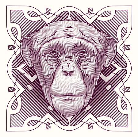 engraving: Engraving head of the monkey on the grunge background.  It may be used for design of a t-shirt, bag, postcard, tattoo a poster etc. Illustration