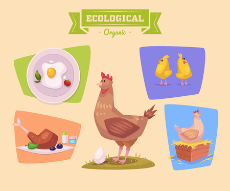 animal cock: Cute chiken farm animal  . Illustration of isolated farm animals set on colored background.  Flat Vector illustration. Stock Vector.