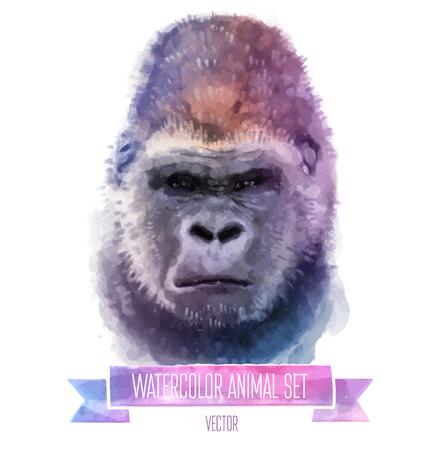 벡터 동물의 집합입니다. 원숭이 손으로 그린 수채화 그림 흰색 배경에 고립 일러스트