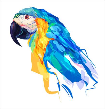 periquito: La cabeza de loro sobre fondo blanco. El diseño retro elemento gráfico. Esta es la ilustración ideal para una mascota y el tatuaje o una camiseta gráfica. ilustración Vectores