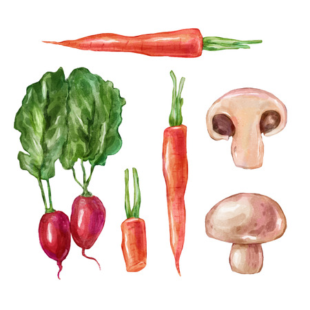 champignon: Watercolor vegetables mushroom champignon radishes, . Big collection of hand drawn illustrations. Good for book illustration, magazine or journal article.