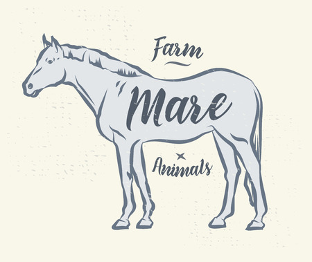 Vector silhouette of a horse. Vector stock type illustration. Vector Illustration