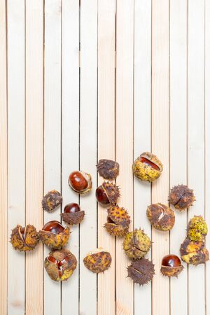Ripe large chestnut nuts in prickly shell are scattered on light wooden boards. Vertical background with copy space and place for text, design. Imagens