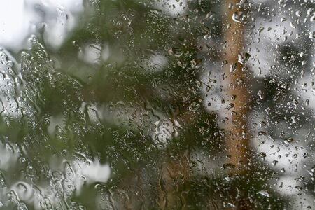 Drops of water run down glass. Rain on transparent surface of window. Blurred forest background. selective focus.