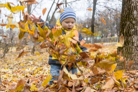 Cute little boy watches the fall of colorful, dry autumn leaves after being thrown up in city Park. Games with child in nature, in fresh air. Happy, carefree childhood. Early development.