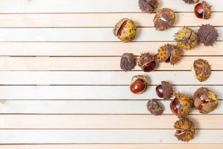 Ripe brown aesculus hippocastanum and nuts in prickly shell are scattered on light wooden background with copy space and place for text, design. Flat lay.