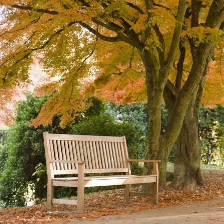 bench park: Banco solitario en oto�o Foto de archivo