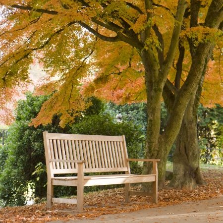 college campus: Lonely Bench in Autumn