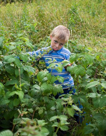 The little boy grimaces in crimson bushes.