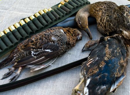 Feathery game a shot-gun and bandolier on a table covered with a fabric. Stock Photo