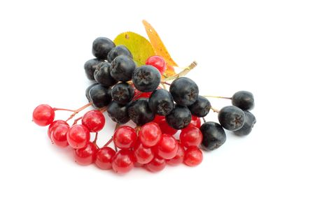 Clusters of berries of a guelder-rose and mountain ash on a white background. Stock Photo - 5639536