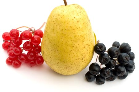 Clusters of berries of a guelder-rose and black chokeberry about a ripe yellow pear on a white background. photo