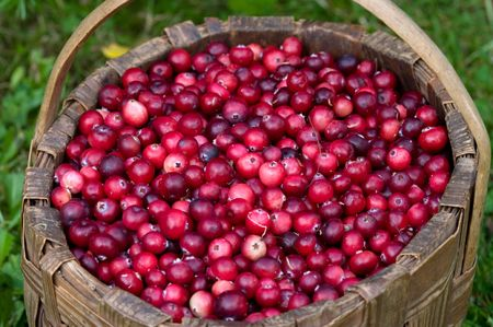 Basket with a fresh cranberry on a green grass. Stock Photo - 5639564