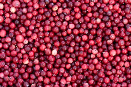 Background from fresh ripe red berries of a cranberry. Stock Photo - 5639565