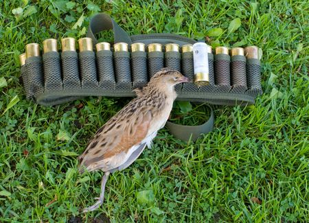 Ammunition belt with huntings cartridges on a green grass. Stock Photo