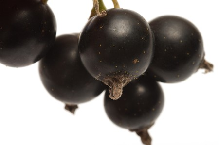 bacca: Berries of a black currant on a white background. Stock Photo