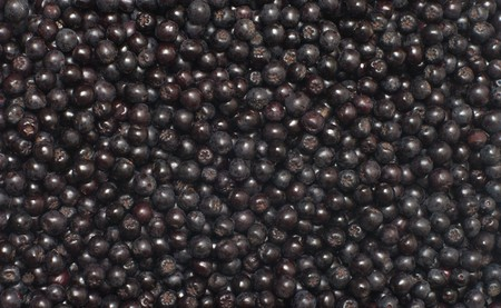 bacca: Close up shot background of aronia berries.