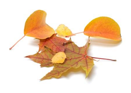 Autumn leaves isolated on white background. Stock Photo