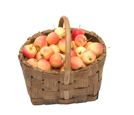 molly: Wattled basket with ripe apples it is isolated on a white background. Stock Photo