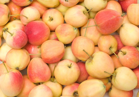Background from ripe apples. Stock Photo - 10443594